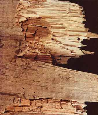 Wet Rot Cuboidal Cracking