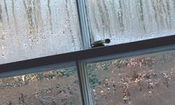 condensation-on-windows